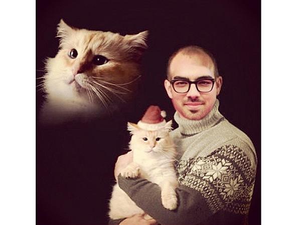 Joe Jonas Bald, Holds Cat in Instgram Photo