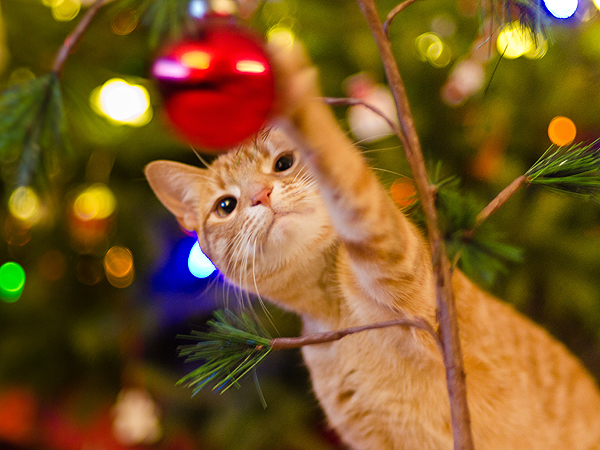 7 Ways to Pet-Proof Your Christmas Tree