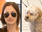 Stars and Their Pets: Minka Kelly's Furry Flyer | Minka Kelly