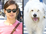 Stars and Their Pets: Olivia Wilde's City Strutter