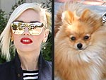 Stars and Their Pets: Gwen Stefani's Fur-ocious Accessory