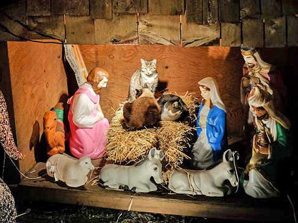Cats Take Over Brooklyn Nativity Scene
