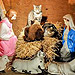 PHOTO: Cats Crash Brooklyn Nativity Scene