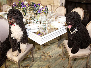 The Daily Treat: Bo & Sunny Obama Go All Out for State Dinner