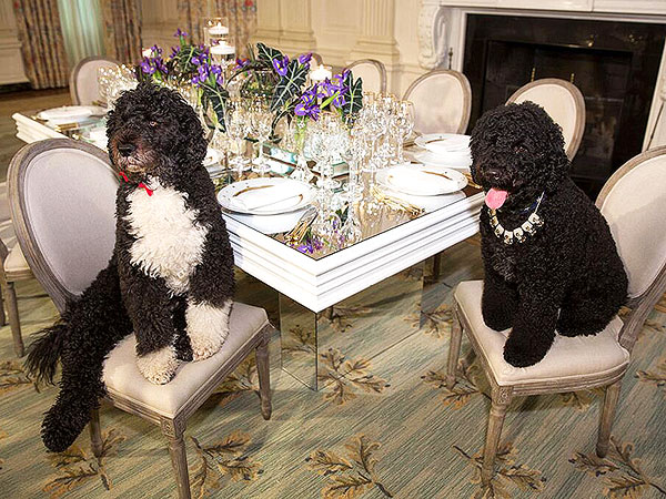 Bo and Sunny Obama: State Dinner Photo