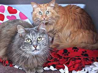 Adopt Us! Get Double the Cuddles with Nika & Loxi
