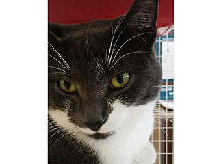 Adopt Me! Handsome Sebastian Will Have You at Hello