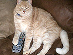 Four Pets Who Have Confiscated Your Remote