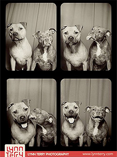 The Daily Treat: Pit Bulls Take Best Photo Booth Selfie Ever