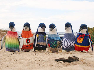 The Daily Treat: Australian Rescue Penguins in Need of Hand-Knit Sweaters | Animals