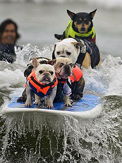 The Daily Treat: 5 Perfect Photos of Dogs Surfing in Australia