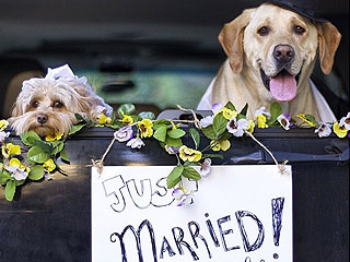 The Daily Treat: Dogs Tie the Knot – See Their Love Unfold in Pictures | Animals & Pets, Cute Pets, Funny Pets, Pet News