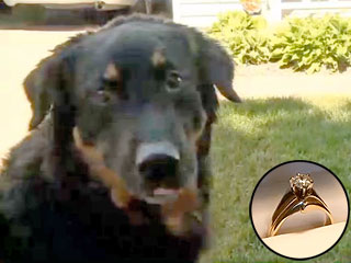 The Daily Treat: Dog Returns Missing Wedding Ring That He Swallowed