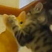 Kitten Uses Ceramic Cat as Personal Punching Bag