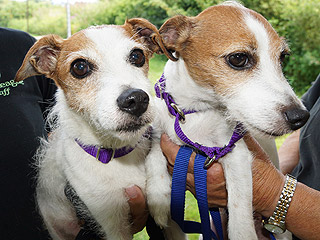 Adopt Me! Scruffy & Muffin Are Two Peas in a Pod