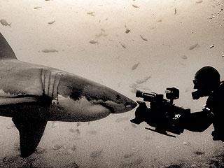 From EW.com: How One Shark Week Filmmaker Captures the Predator's 'Smile'