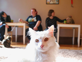 Purr-ty Cool: California's First Cat Café to Open in October