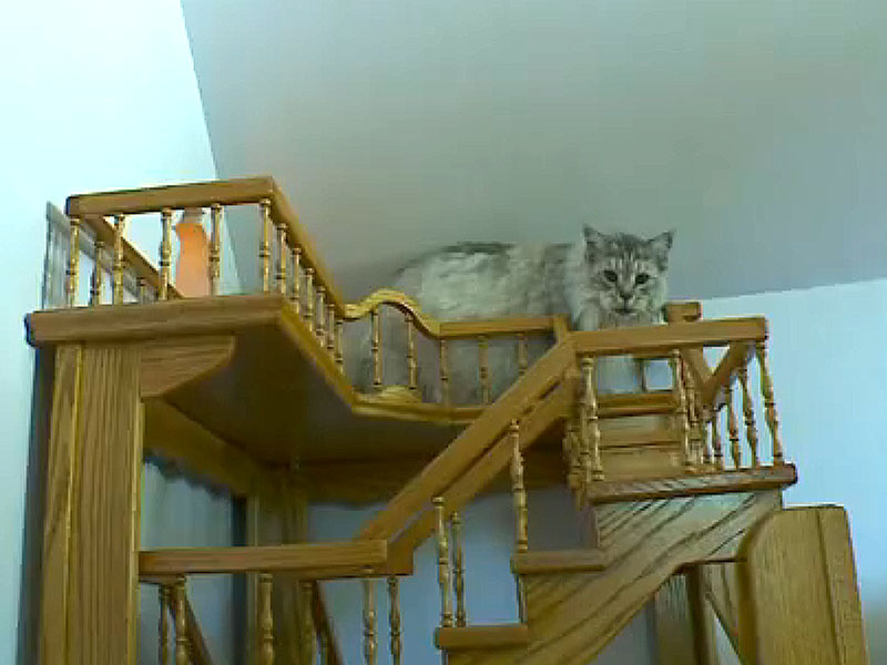 Man Builds Cat Tunnels In House