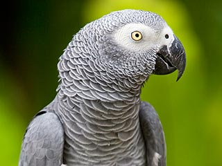 Parrot Missing for 4 Years Returns Speaking Spanish