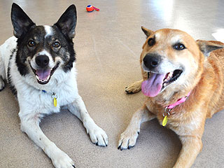 Adopt Me! Rascal & Jersey Are a Duo to Adore
