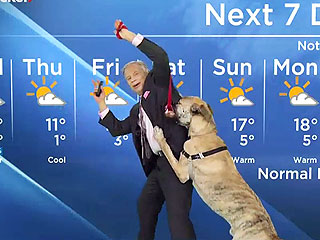 Ripple the Dog Steals the Spotlight During Canadian Weather Forecast