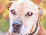 Former Michael Vick Dog Turned Therapy Pup Dies