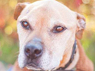 RIP, Hector: Former Michael Vick Dog Turned Therapy Pup Dies