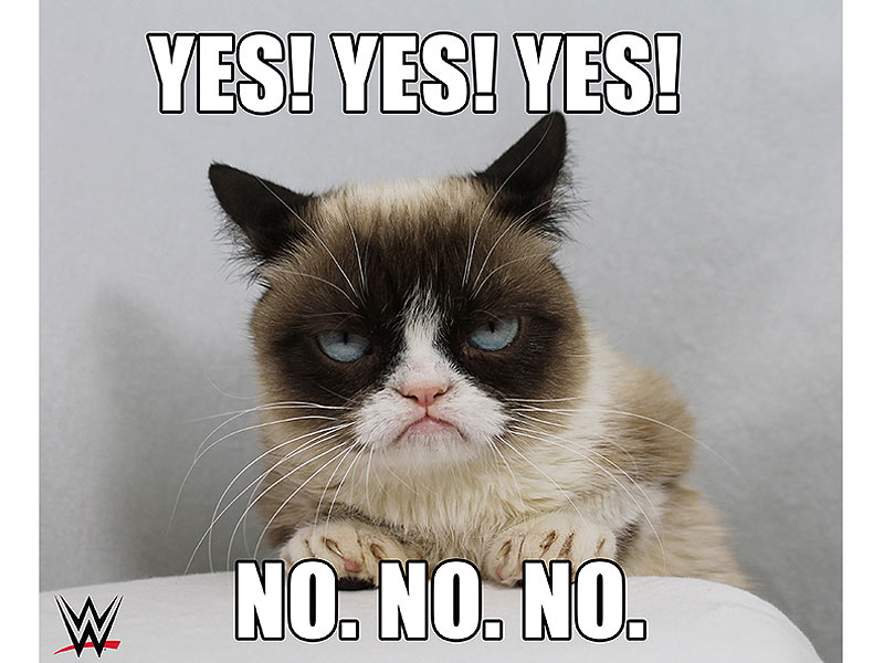 Does Grumpy Cat Have Down Syndrome