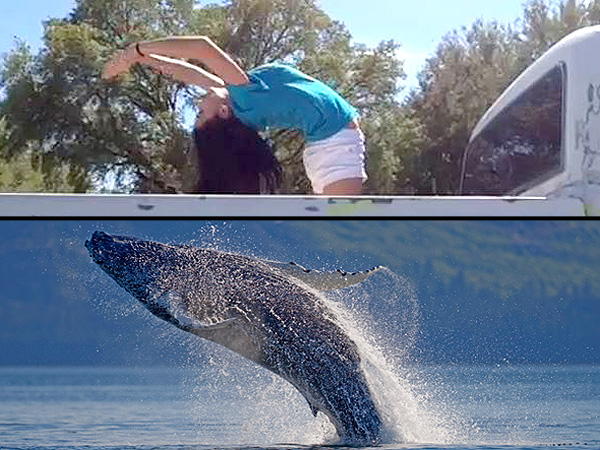 'Whaling': New Vine Trend Sees Users Impersonating Humpback Whales