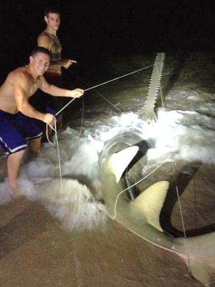Saw Fish Captured by Dustin Richter in Boynton Beach