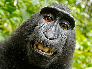 Monkey's Smiling 'Selfie' Sparks Intense Copyright Dispute