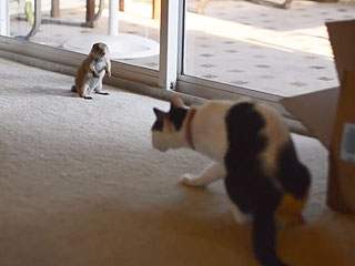 VIDEO: Baby Prairie Dog and Cat Become the Best of Friends