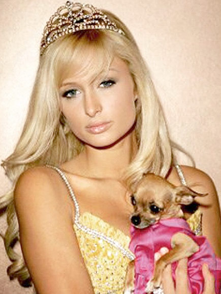 Paris Hilton s Dog Tinkerbell Paris Hilton