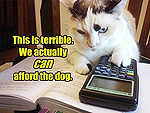 Four Cats That Are Totally Getting Audited