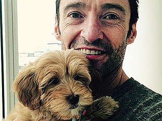 Update: Hugh Jackman's Cute New Pup Has a Name
