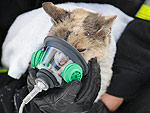 Can We Hug this Firefighter Who Saved a Cat in a House Fire?