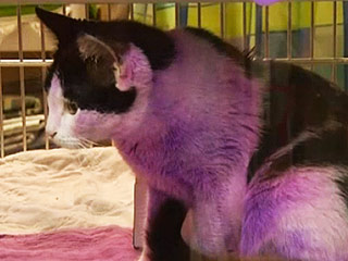Fuchsia the Purple Cat Is Up for Adoption in Texas