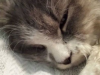 Cat Found with Zip-Tied Paws Recovering in Massachusetts