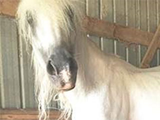 Horses with Hooves 3-Feet-Long Rescued from Neglect in Maryland