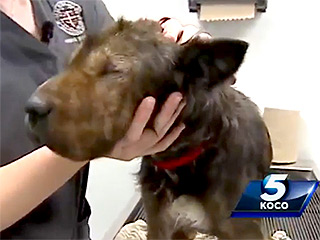 Dog Without Eyes Dumped in Lobby of Oklahoma Shelter