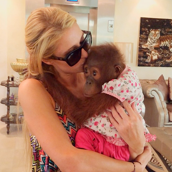 Paris Hilton Apologizes to Animal Activists From United Nations
