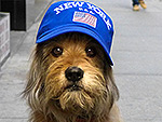 Benji Is Back: Hollywood's Favorite Canine Star Takes on the Big Apple