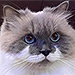 Mister Miso Is the Mustached Cat You Need to Meet
