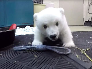 VIDEO: Cute Columbus Zoo Polar Bear Cub Gets Sweet Name