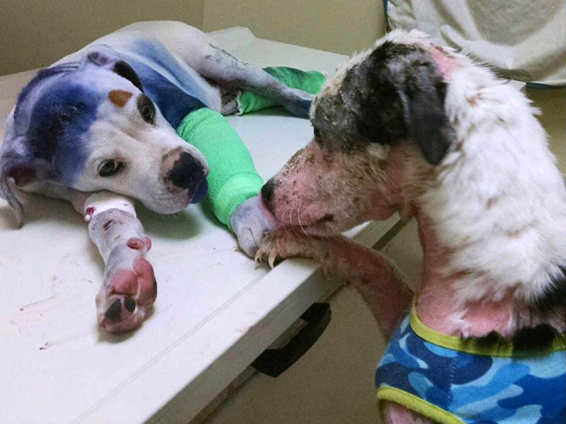 Rescue Dogs in South Carolina Comfort Each Other: Photo