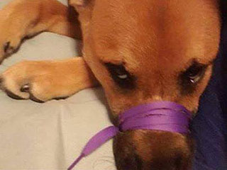 Owner Charged After Posting Facebook Photo of Dog's Mouth Tied Shut
