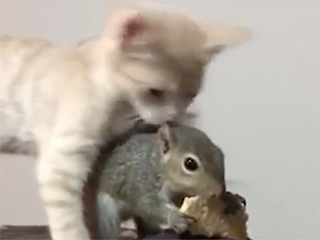 WATCH: Squirrel and Kitten Fight Like Siblings for Cracker