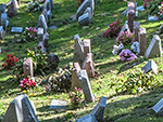 New N.Y. Law Allows Owners to Be Buried with Pets