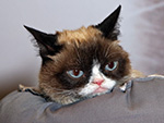 WATCH: Grumpy Cat Is Headed to Broadway!