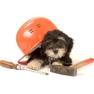 dog with hard hat and tools
